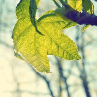 Leaf nature translucent grow foliage 99150